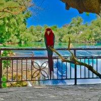 Попугай на водопаде Манавгат. :: Виктор Евстратов