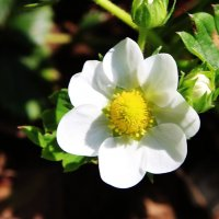 мАленький цветочек :: Damir Si