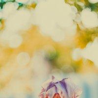 Весеннее цветение :: Alexander Yasinovsky