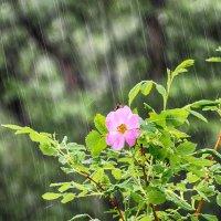 Июньский дождь... :: Константин Филякин