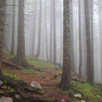 туман :: Владимир Пензин