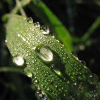 Ночь ,роса, зленая трава… :: Владимир Гилясев