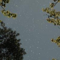 звёзды из пуха... :: Михаил Жуковский