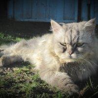 Кот учёный :: Алексей Таскаев