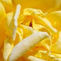 Жовта :: Александр Скамо