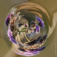 цветочный калейдоскоп репейный :: Маргарита Лапина