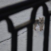 пёс гуляет по Фонтанке :: Екатерина Жукова