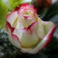 Роза в букете :: Сергей Карачин
