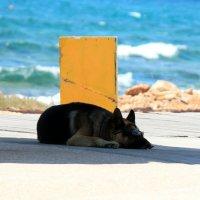 Человек- друг собаки. :: Ирина Сивовол