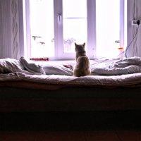 одиночество :: Екатерина Липинская