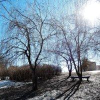 Весеннее солнышко по пригорку катится :: Денис Масленников
