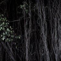 Филиппинский темный лес :) :: Николай