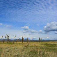 Прошлогодняя трава :: юрий Амосов