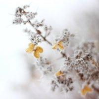 зима :: Светлана Воронова