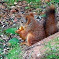 - А я яблоки люблю!!! Они такие вкусные!!! :: Наталья Пендюк Пендюк