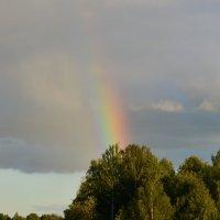 Кусочек радуги :: Ольга