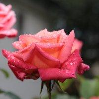 Цветочный хоровод-118. :: Руслан Грицунь