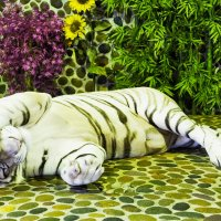 Ну уж очень скромный белый тигр.(альбинос)Тайланд :: Евгений Подложнюк