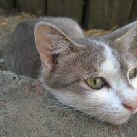 Котик :: Любовь Клименок