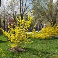 Весна в Братском саду.Астрахань. :: Анастасия Богатова