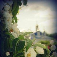 цветение садов.... :: Lilek Pogorelova