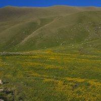 Желтая полянка :: M Marikfoto