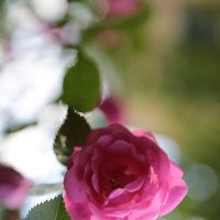 Цветочный хоровод-125. :: Руслан Грицунь