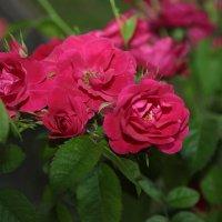 Цветочный хоровод-123. :: Руслан Грицунь