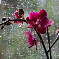 Маргаритки могут сказать ей, что вы ее любите, но чтобы доказать это, нужны орхидеи. :: Anna Gornostayeva
