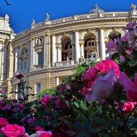 цветы и Опера :: Александр Корчемный