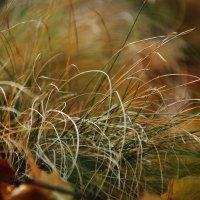 Травы.... :: Валерия  Полещикова