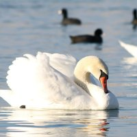Царевна-лебедь :: Nyusha