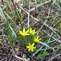 Весенние цветы. :: Маша Кутняя