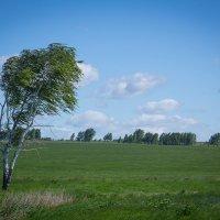 Ветер. :: Аркадий Шведов
