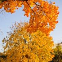 Золотая осень ... :: Іван