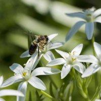 Пчелка :: Яна Костюкова