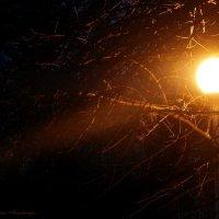 Ночь, улица, фонарь... :: Анастасия Неретина