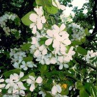 Flower :: Анастасия Неретина
