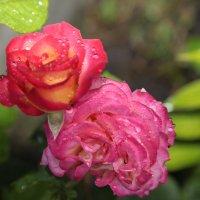 Цветочный хоровод-128. :: Руслан Грицунь
