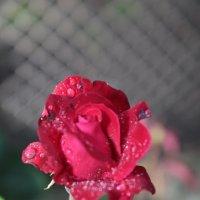 Цветочный хоровод-127. :: Руслан Грицунь