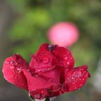 Цветочный хоровод-126. :: Руслан Грицунь