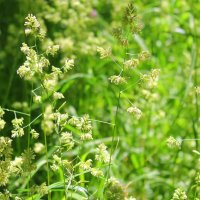 Травы луговые . :: Валентина ツ ღ✿ღ
