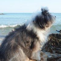 бобтейл и море :: Лариса Батурова