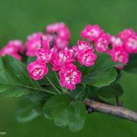 Весеннее цветение :: Вячеслав Касаткин