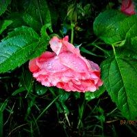 ..после дождя... :: неля  тулузова