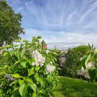 Тайницкий сад :: mila