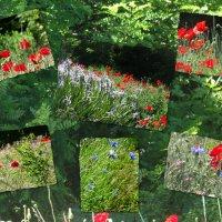 Цветущий июнь... :: Тамара (st.tamara)