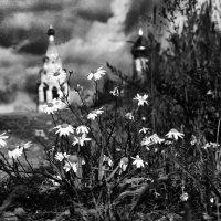 Ромашки и храм :: Дмитрий Воронин