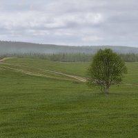 Во поле березка стояла :: Игорь Чубаров