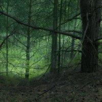 Таинство леса :: Илья Костин